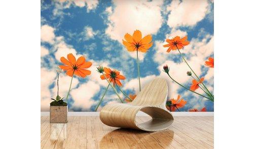 Fotobehang Cosmos Flower