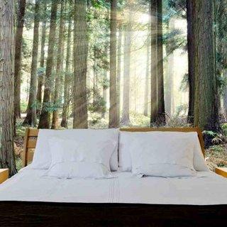 Selbstklebende Fototapete angepasst - Wald Sonnenaufgang 3