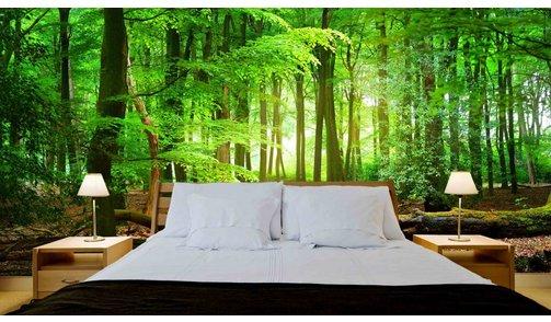 Self-adhesive photo wallpaper custom size - Forest sunrise 4