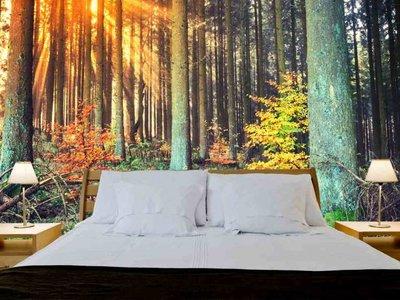 Mural Forest Autumn