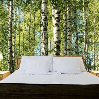 Selbstklebende Fototapete angepasst - Wald Birken