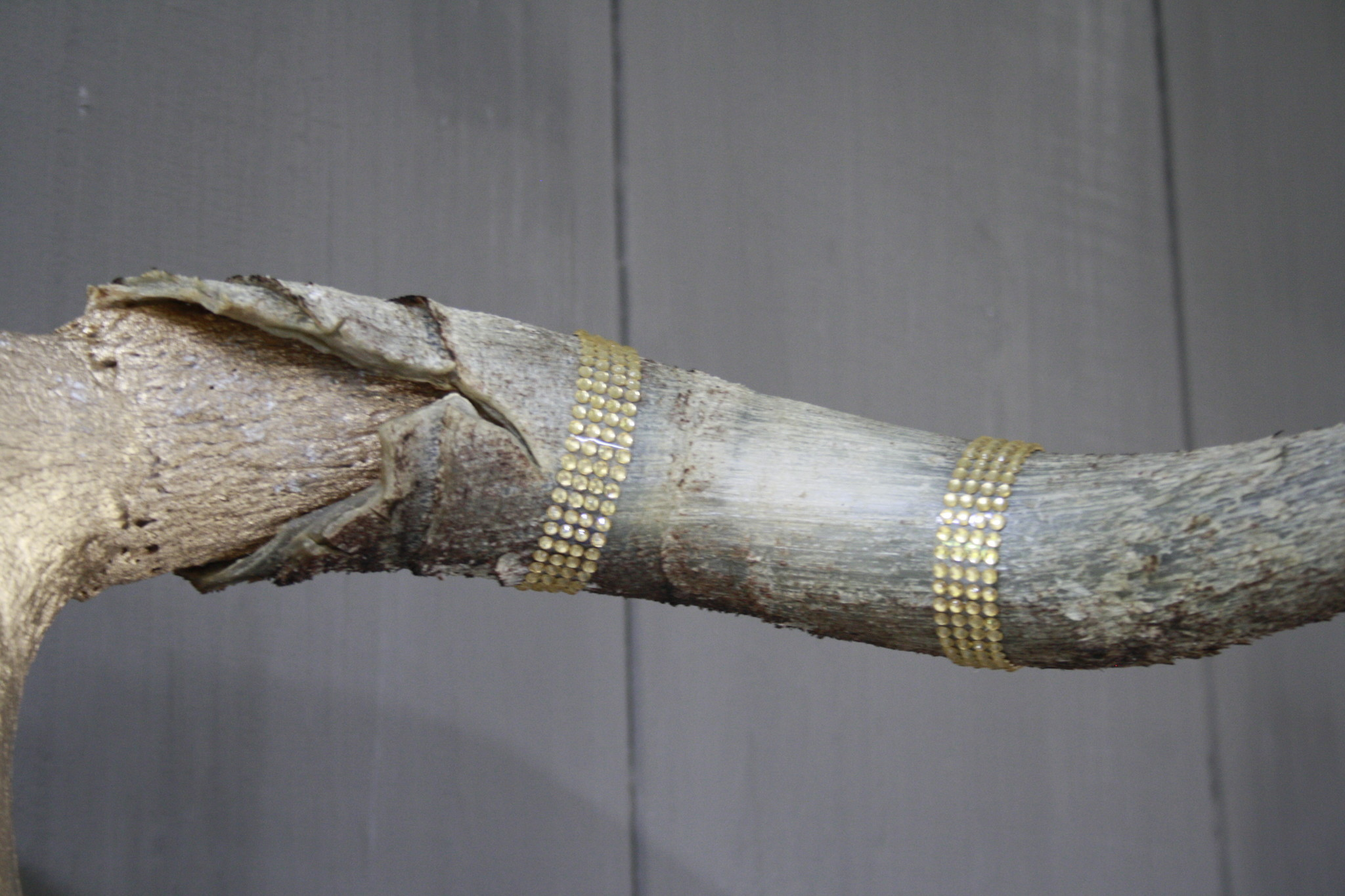 Longhorn Schedel Goud Met Hoorns 63 x 44 cm - Copy-5