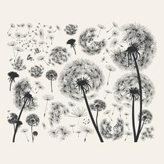 Amatxi Amatxi - Transfer - Black Dandelions