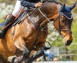 Ondersteuning van gewrichten paard