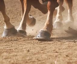 Hoefolie en hoefvet paarden