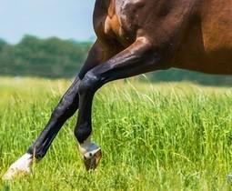 Ondersteun de pezen en ligamenten van je paard.