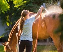 Producten om je paard van buitenaf te verzorgen