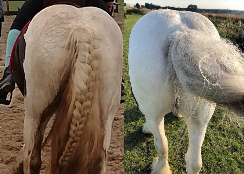 Hoe Renskes paard weer schone billen kreeg