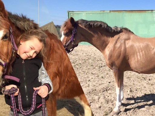 Paarden met ziekte van Cushing