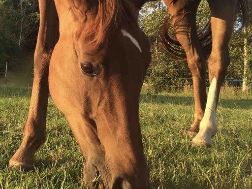 Voermanagement Paarden: Maak het verschil!