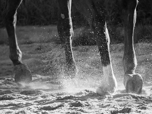 Krampbeen bij een paard | Oorzaak, Behandeling en Supplement