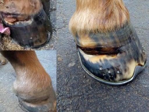 Hoeven paard | meest voorkomende problemen
