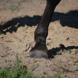Peesschedeontsteking paard | Herkennen en voorkomen