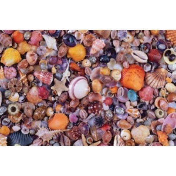 Schelpen Puzzel - 1000 stukjes