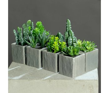 Succulent set in cement pot assorti
