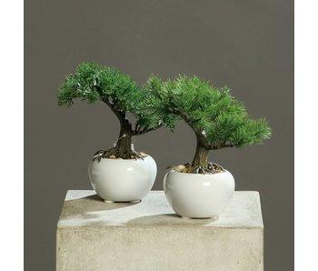 Bonsai assorted 18cm