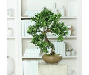 Bonsai in ceramic bowl 55cm