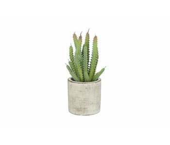 Hamilton Living Kunstcactus in cement pot