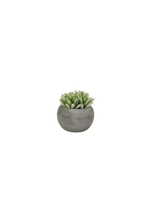 Hamilton Living Plant succulent in cement pot n8