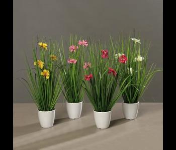 Siergras met bloem in pot klein