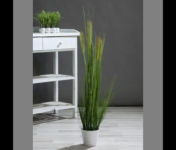 Herbe ornementale en cache-pot blanc 110cm