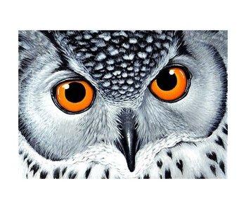 Dia paint WD243 - Owl's Look 38x27 cm