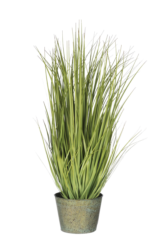 Grassen In Pot.J Line Grassen Wild In Pot Plas Grn L