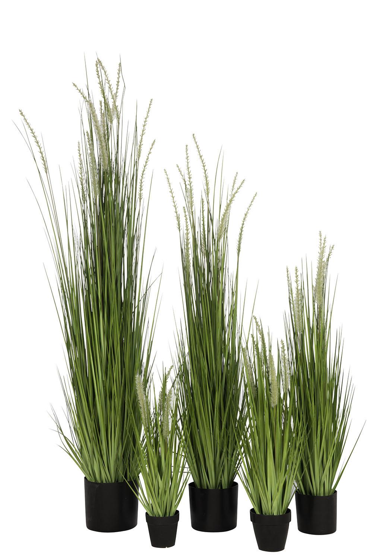 Grassen In Pot.Grassen In Pot Plast Grn Zw Xl