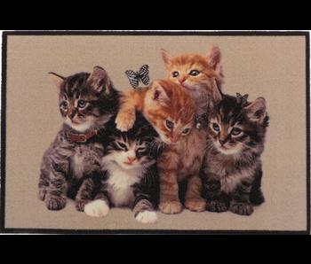 Deco - star dieren 50x80cm jonge katten