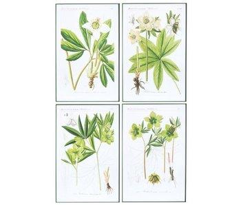 J-Line Décoration murale Plantes Classique Bois / Verre Blanc / Vert Assortiment de 4