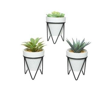 Vetplant  in pot plastic/1 - H16cm