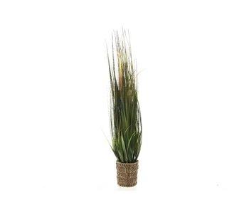 Grass plastic