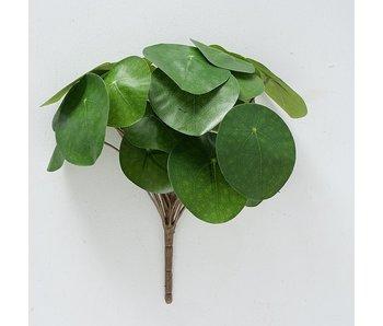 Fleur Pilea h25 cm vert