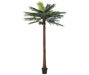 J-Line Palmier 4 Noix De Coco En Pot Plastique Vert