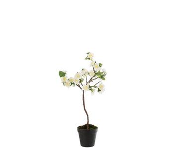 J-Line Arbre fleuri Plastique Blanc / Marron Petit