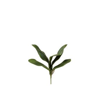 J-Line Feuilles Orchidée Plastique Vert