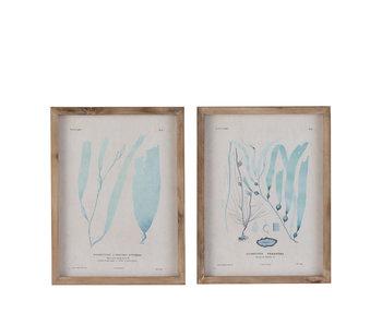 J-Line Kader Plant Hout/Glas Blauw Assortiment Van 2