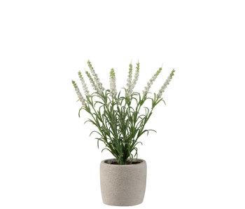 J-Line Lavendel In Pot Plastiek Wit