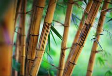 Zao & Bamboe