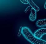 Wat is het microflora van de huid?