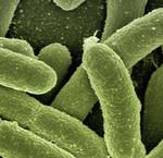 Wat is het verschil tussen probiotica en prebiotica?