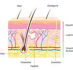 De opbouw van de huid