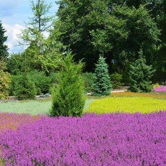 Arboretum 'De Dreijen' in Wageningen