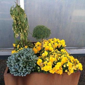 Cortenstalen plantenbak