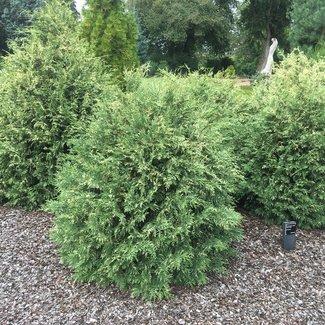 Tuin van een klant Arboretum 'De Dreijen'  Wageningen