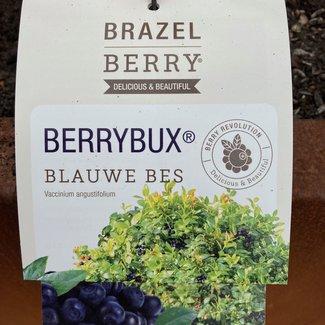 BERRYBUX ® (Vaccinium)
