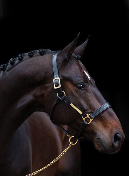 Horseware Amigo Padded Leather Headcollar