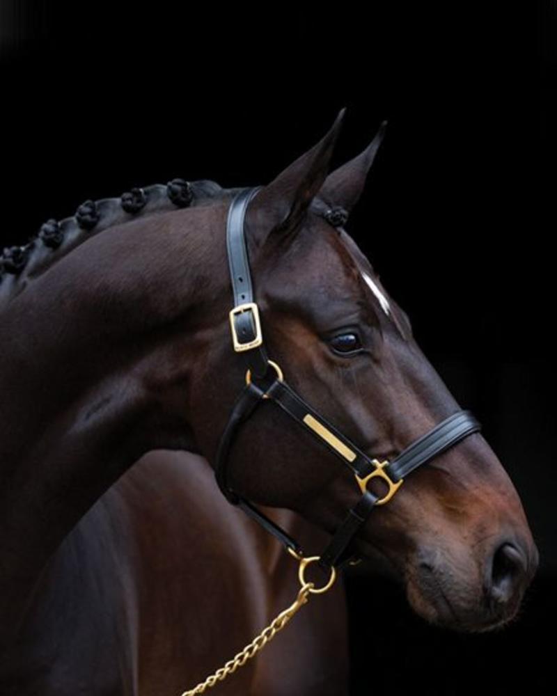 Horseware Amigo Padded Leather Halster