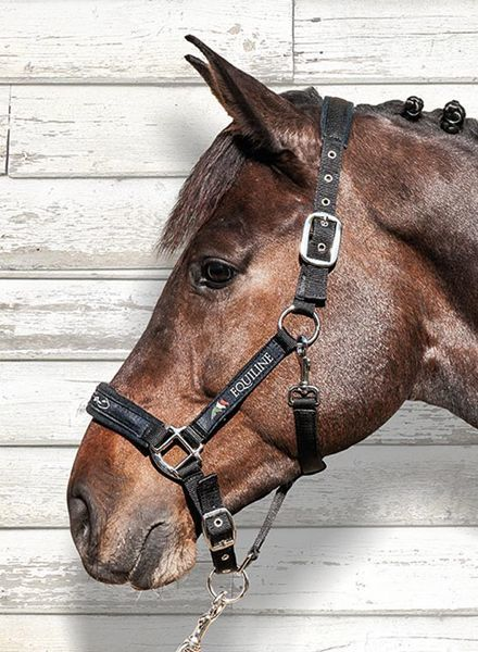 Equiline Halter and Lead Rope Set