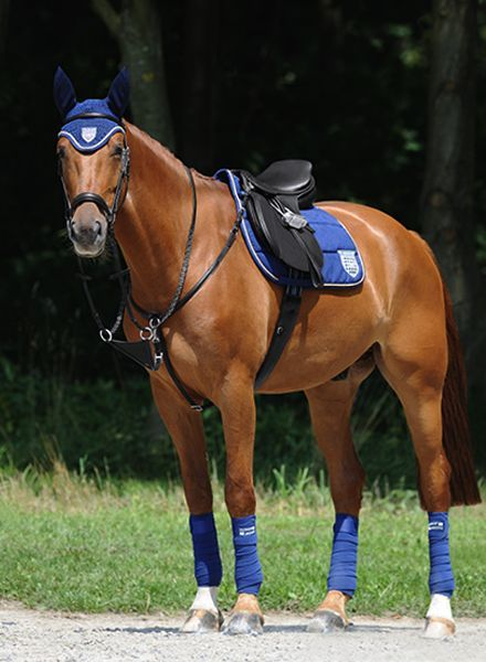Passier Phoenix Breastplate + Closed and Running Martingale Attachment Black
